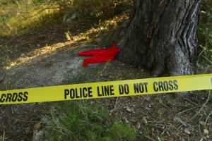 © Mangostock | Dreamstime.com - Crime Scene: Police Line Do Not Cross Tape Photo